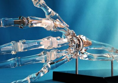 Clear articulating hand and finger model