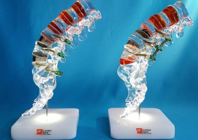 Acrylic spine model for trade show display
