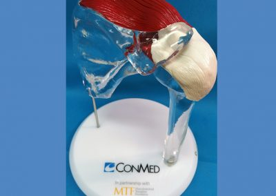 Shoulder suture training model