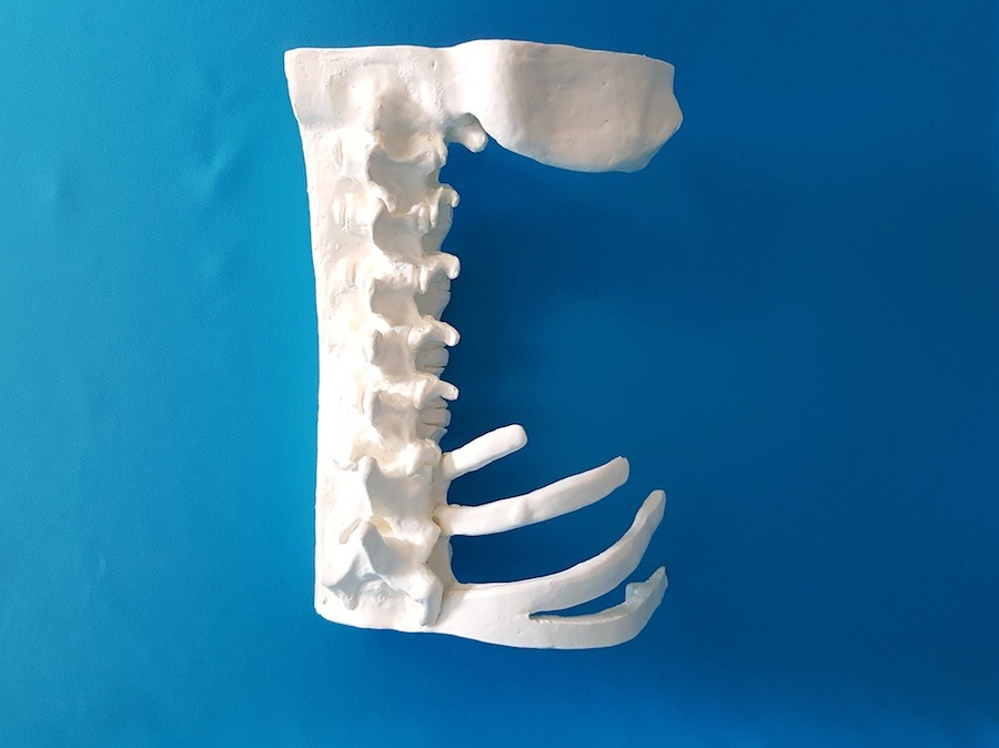 bone model